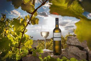 Wein der Linie Blau von Wilhelm Kern