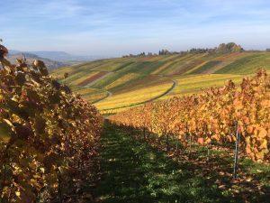 Weinberge im Herbst; Lieferant der Trauben für die Weine von Wilhelm Kern